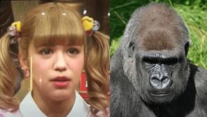 sara-gorilla-01